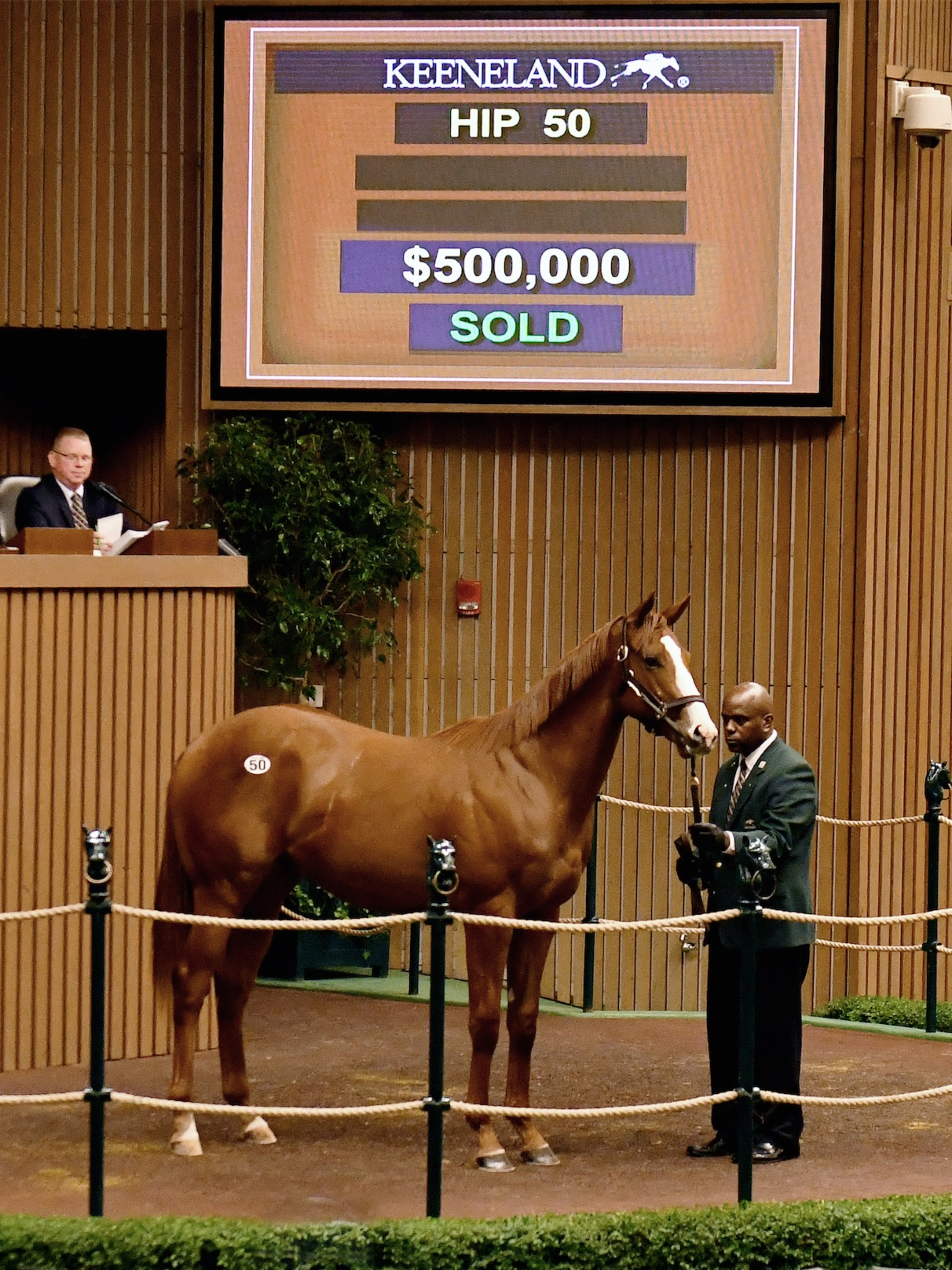 Justify as a yearling